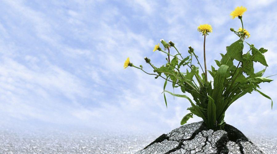 résilience et détermination